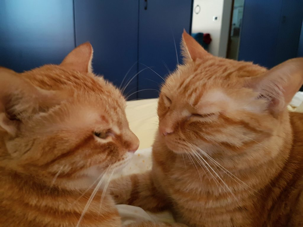 Ginger e Pallina